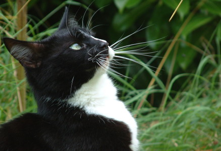 Photo of a black & white cat looking up at the sky