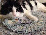 photo of black & white cat laying on money