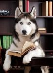 A siberian husky sitting with its paws on an open book as if it is reading. There is a bookshelf in the background.